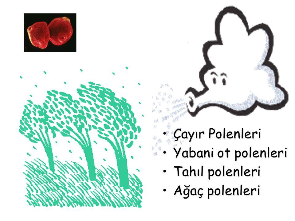 Çayır PolenleriÇayır Polenleri Yabani ot polenleriYabani ot polenleri Tahıl polenleriTahıl polenleri Ağaç polenleriAğaç polenleri
