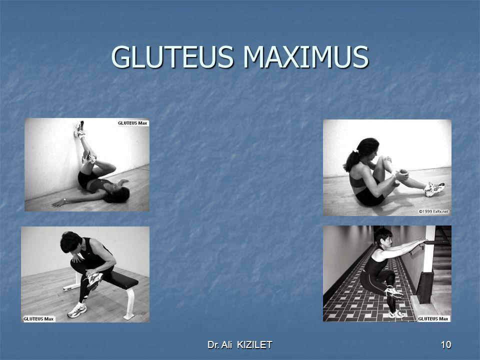 Dr. Ali KIZILET10 GLUTEUS MAXIMUS