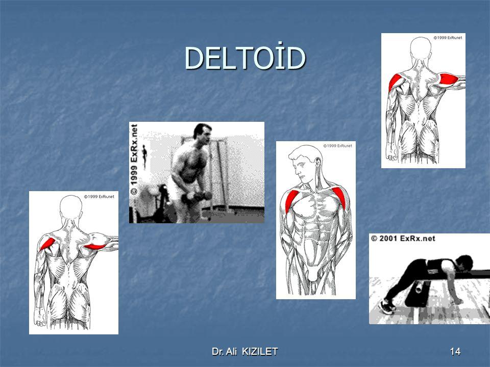 Dr. Ali KIZILET14 DELTOİD