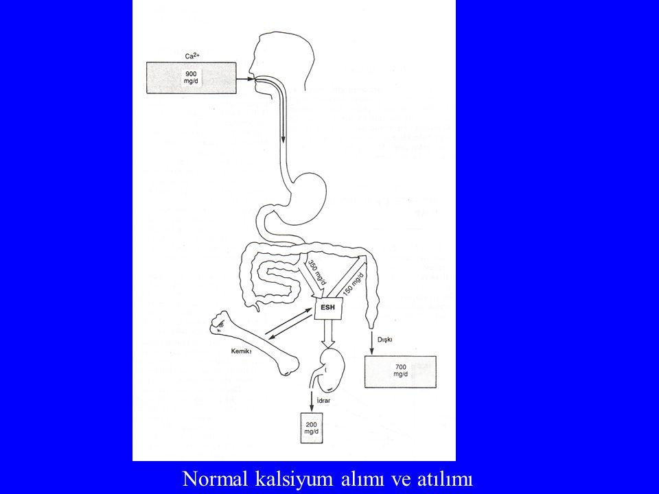 Normal kalsiyum alımı ve atılımı