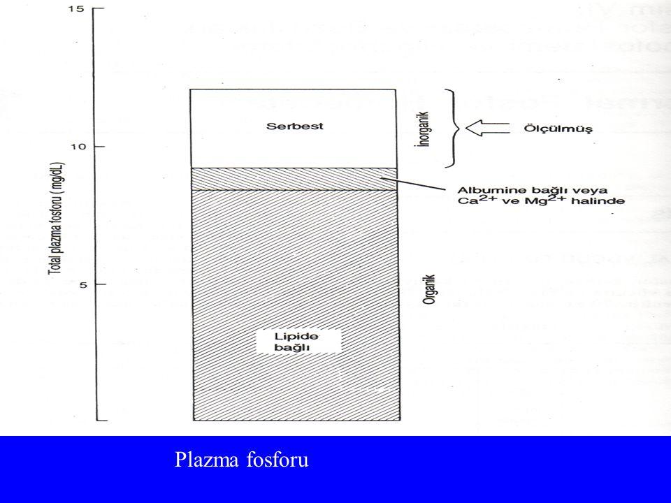 Plazma fosforu