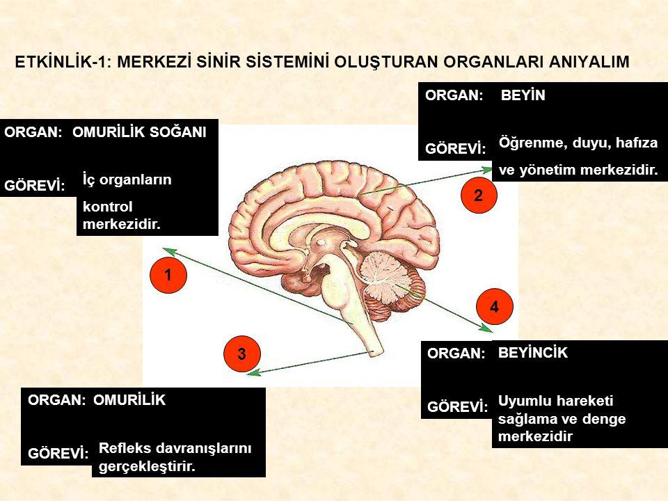 ETKİNLİK-2: İÇ SALGI BEZLERİNİ TANIYALIM BÖBREK ÜSTÜ TİROİT PANKREAS HİPOFİZ EŞEYSEL BEZLER Adrenalin Korku, heyecan gibi durumlarda metabolizmayı hızlandırır.