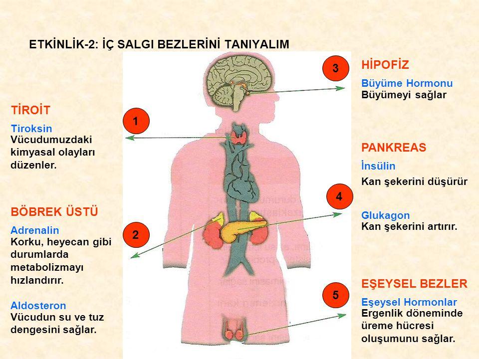 ETKİNLİK-3: GRUPLAMA YAPALIM Örgü ÖrmeÖğrenmeHafıza Kasların Uyumlu Çalışması Solunum Duyu Organlarının Çalışması DolaşımDengeYüzme Yüksek Sesten İrkilme Boşaltım B G F K H D JI EAC MERKEZİ SİNİR SİSTEMİ BEYİNBEYİNCİK OMURİLİK SOĞANI OMURİLİK