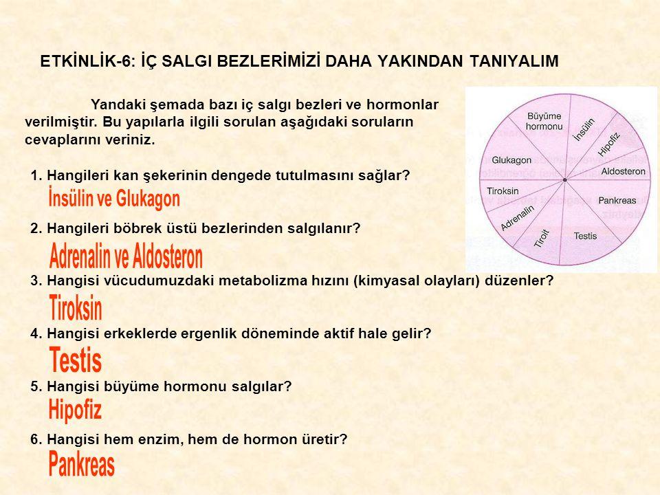 ETKİNLİK-6: İÇ SALGI BEZLERİMİZİ DAHA YAKINDAN TANIYALIM Yandaki şemada bazı iç salgı bezleri ve hormonlar verilmiştir.