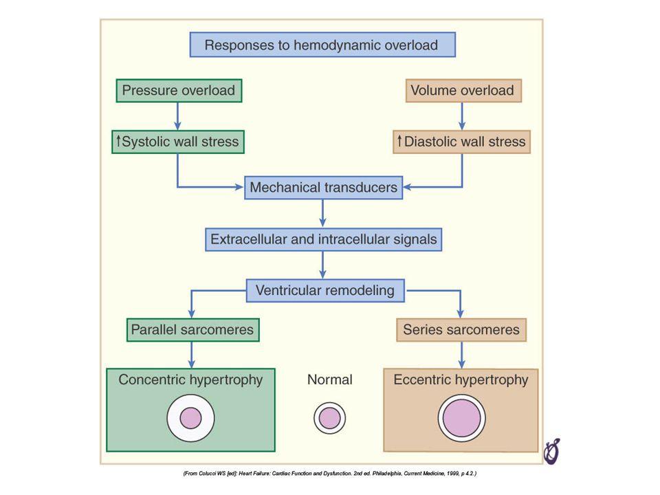 Fizik muayene Asit –Hepatik ven basınç artışı sonucu, uzun süreli venöz hipertansiyon + Pulsus alternans –KY de SV çıkışına resistans olduğu durumlarda HT, AD, koroner atheroskleroz