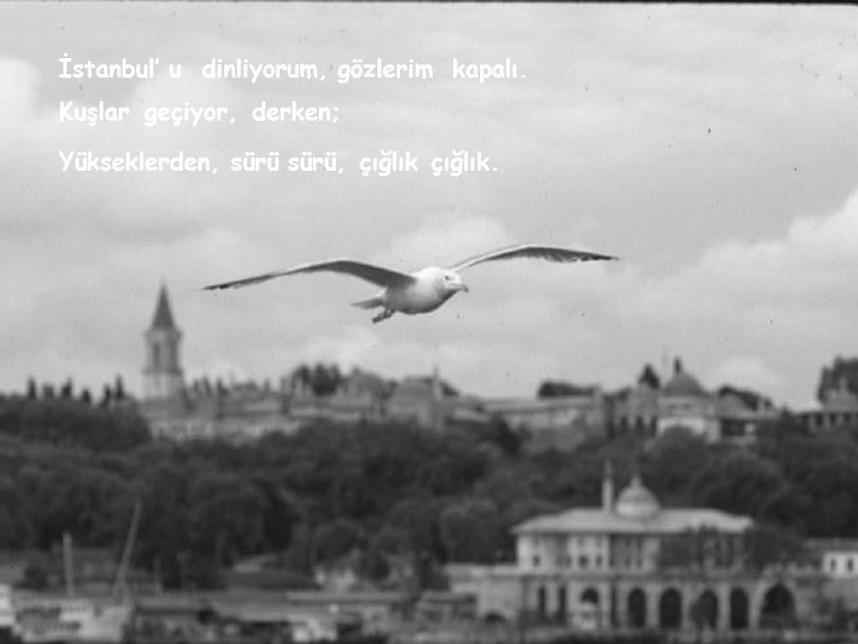 İstanbul' udinliyorum,gözlerimkapalı. Kuşlargeçiyor,derken; Yükseklerden,sürüsürü,çığlıkçığlık.