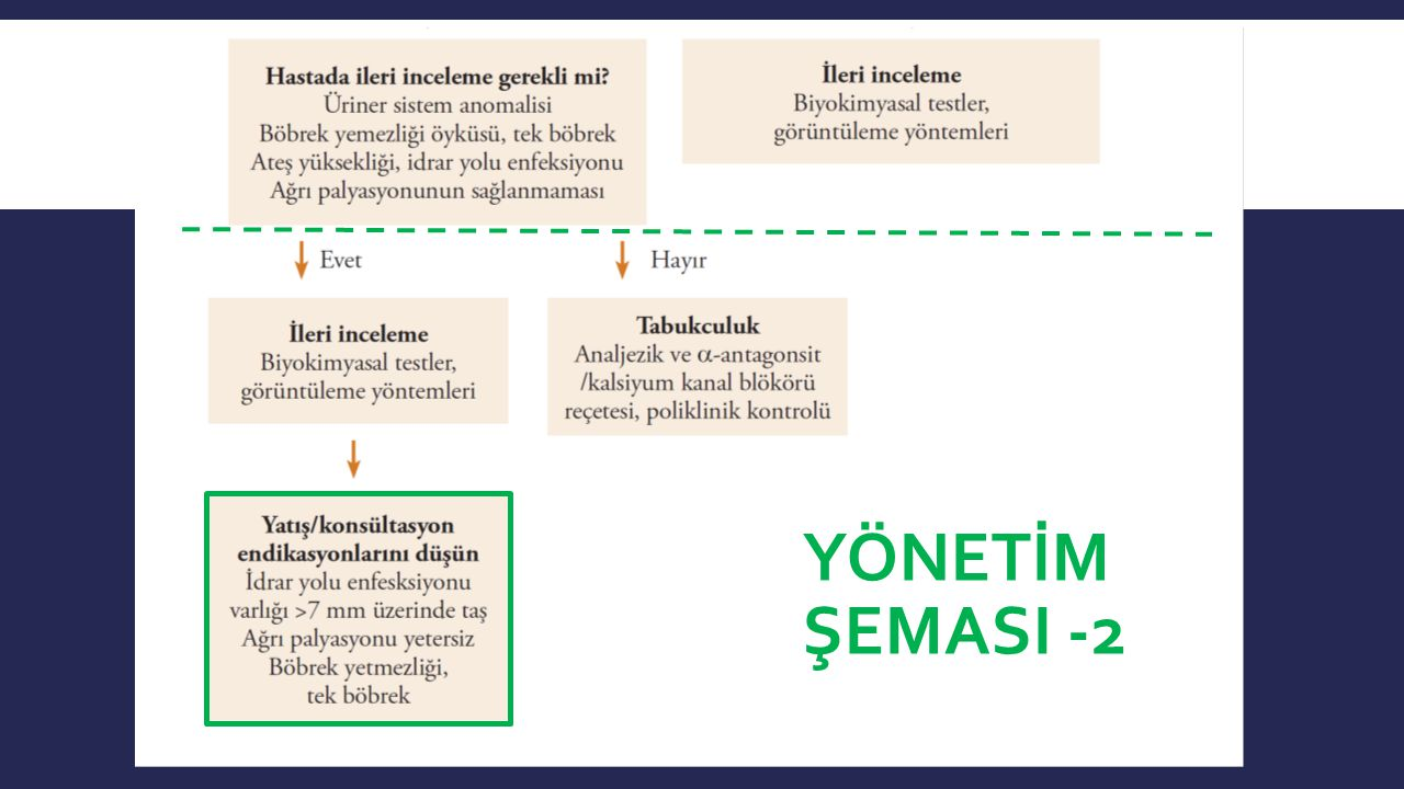 YÖNETİM ŞEMASI -2