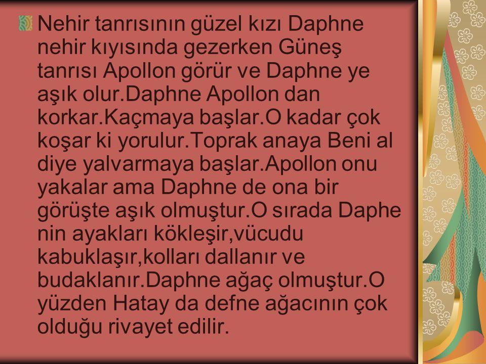Nehir tanrısının güzel kızı Daphne nehir kıyısında gezerken Güneş tanrısı Apollon görür ve Daphne ye aşık olur.Daphne Apollon dan korkar.Kaçmaya başla