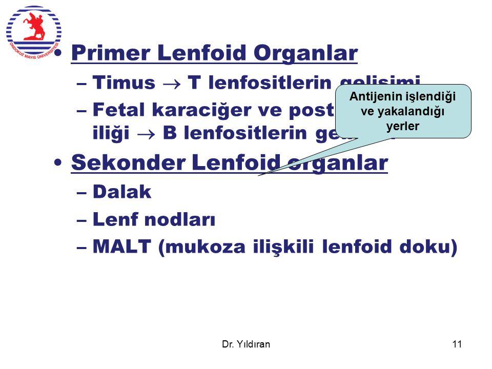 Primer Lenfoid Organlar –Timus  T lenfositlerin gelişimi –Fetal karaciğer ve postnatal kemik iliği  B lenfositlerin gelişimi Sekonder Lenfoid organl