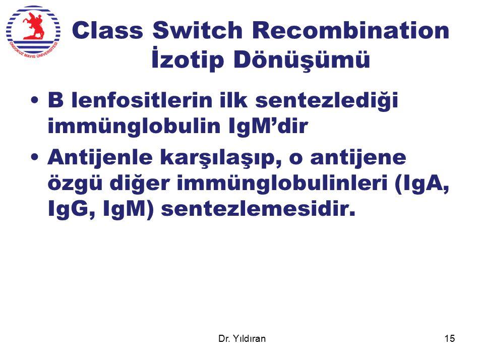 Class Switch Recombination İzotip Dönüşümü B lenfositlerin ilk sentezlediği immünglobulin IgM'dir Antijenle karşılaşıp, o antijene özgü diğer immünglo