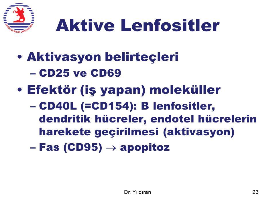 Aktive Lenfositler Aktivasyon belirteçleri –CD25 ve CD69 Efektör (iş yapan) moleküller –CD40L (=CD154): B lenfositler, dendritik hücreler, endotel hüc