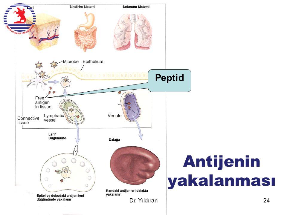 Antijenin yakalanması Peptid Dr. Yıldıran24