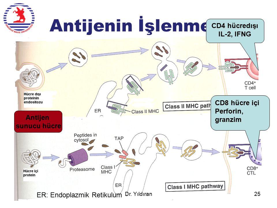 Antijenin İşlenmesi CD4 hücredışı IL-2, IFNG CD8 hücre içi Perforin, granzim ER: Endoplazmik Retikulum Antijen sunucu hücre Dr. Yıldıran25