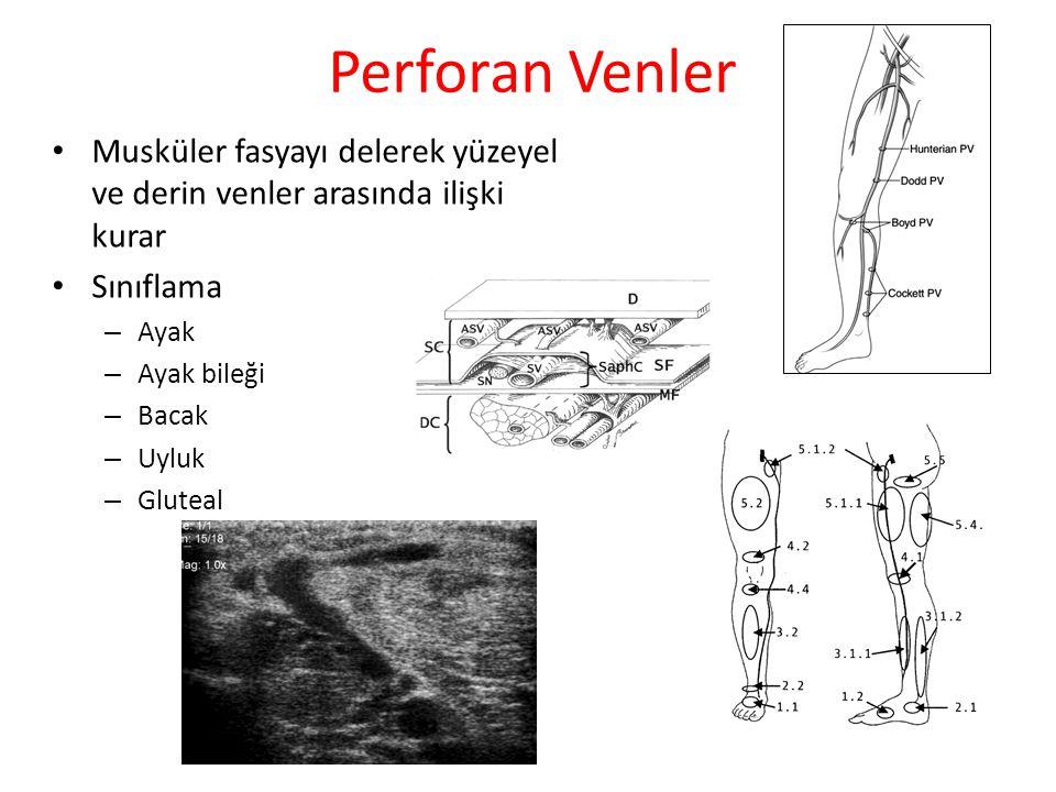 Perforan Venler Musküler fasyayı delerek yüzeyel ve derin venler arasında ilişki kurar Sınıflama – Ayak – Ayak bileği – Bacak – Uyluk – Gluteal