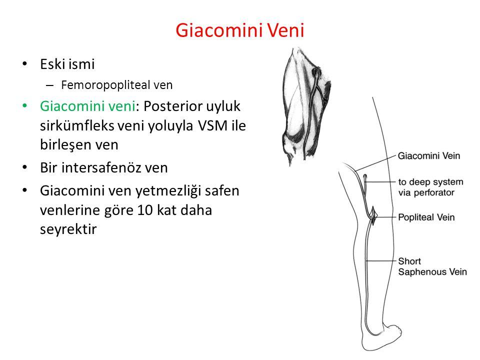 Giacomini Veni Eski ismi – Femoropopliteal ven Giacomini veni: Posterior uyluk sirkümfleks veni yoluyla VSM ile birleşen ven Bir intersafenöz ven Giac
