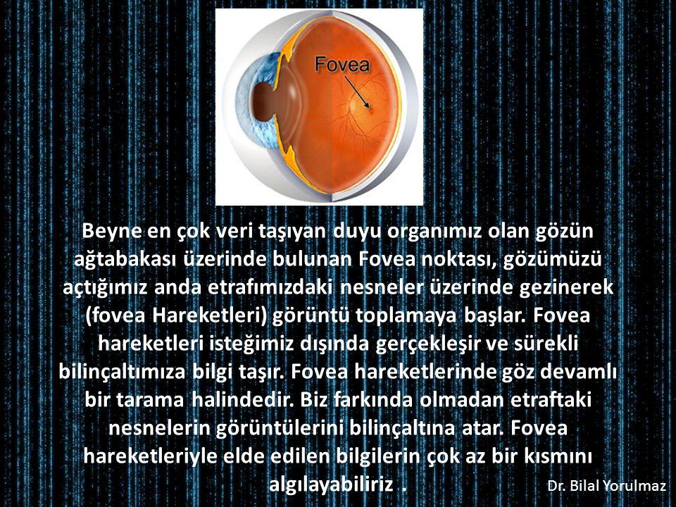 Dr. Bilal Yorulmaz Beyne en çok veri taşıyan duyu organımız olan gözün ağtabakası üzerinde bulunan Fovea noktası, gözümüzü açtığımız anda etrafımızdak