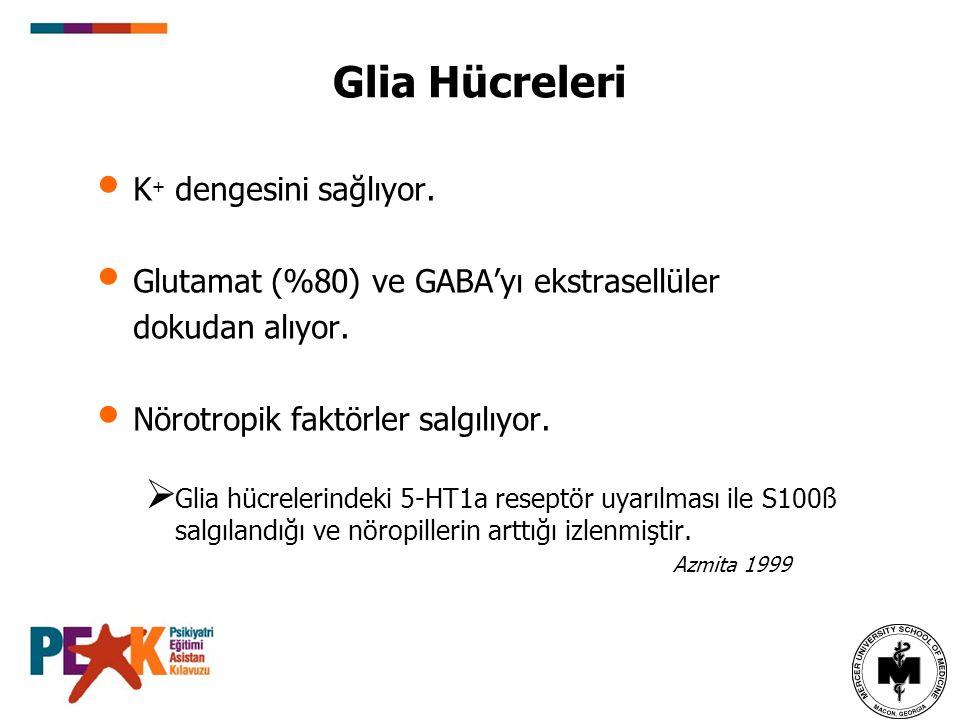 Glia Hücreleri K + dengesini sağlıyor. Glutamat (%80) ve GABA'yı ekstrasellüler dokudan alıyor. Nörotropik faktörler salgılıyor.  Glia hücrelerindeki