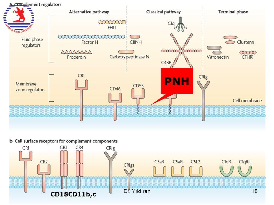 CD18CD11b,c PNH Dr. Yıldıran18