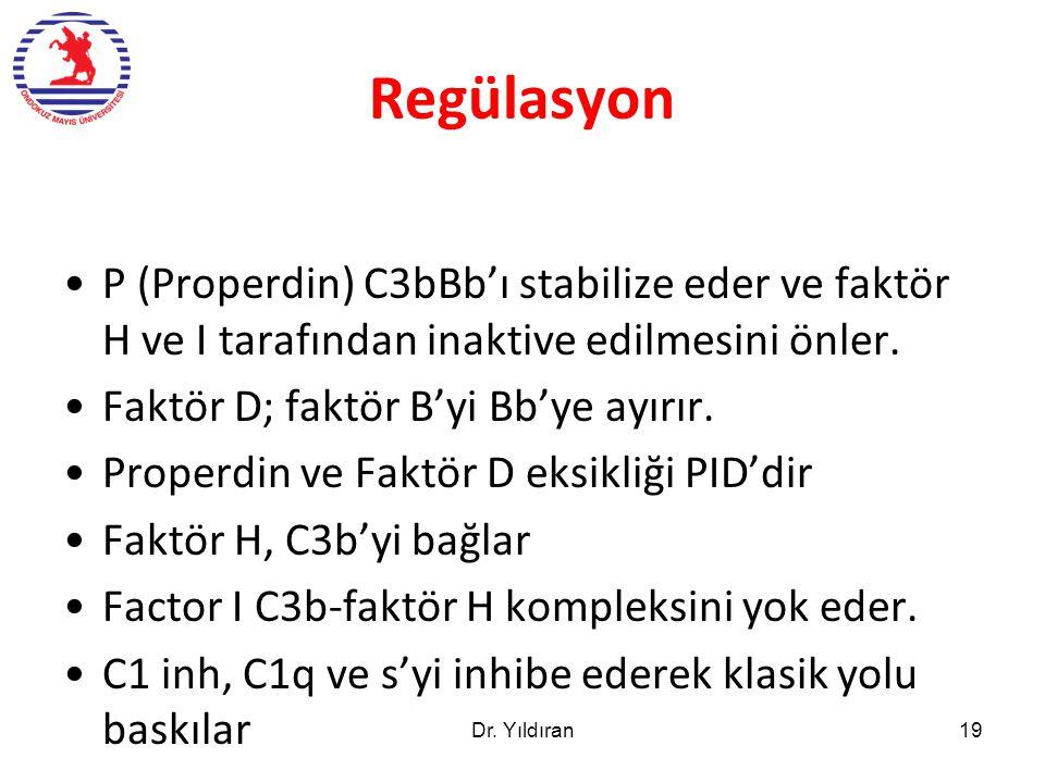 Regülasyon P (Properdin) C3bBb'ı stabilize eder ve faktör H ve I tarafından inaktive edilmesini önler. Faktör D; faktör B'yi Bb'ye ayırır. Properdin v