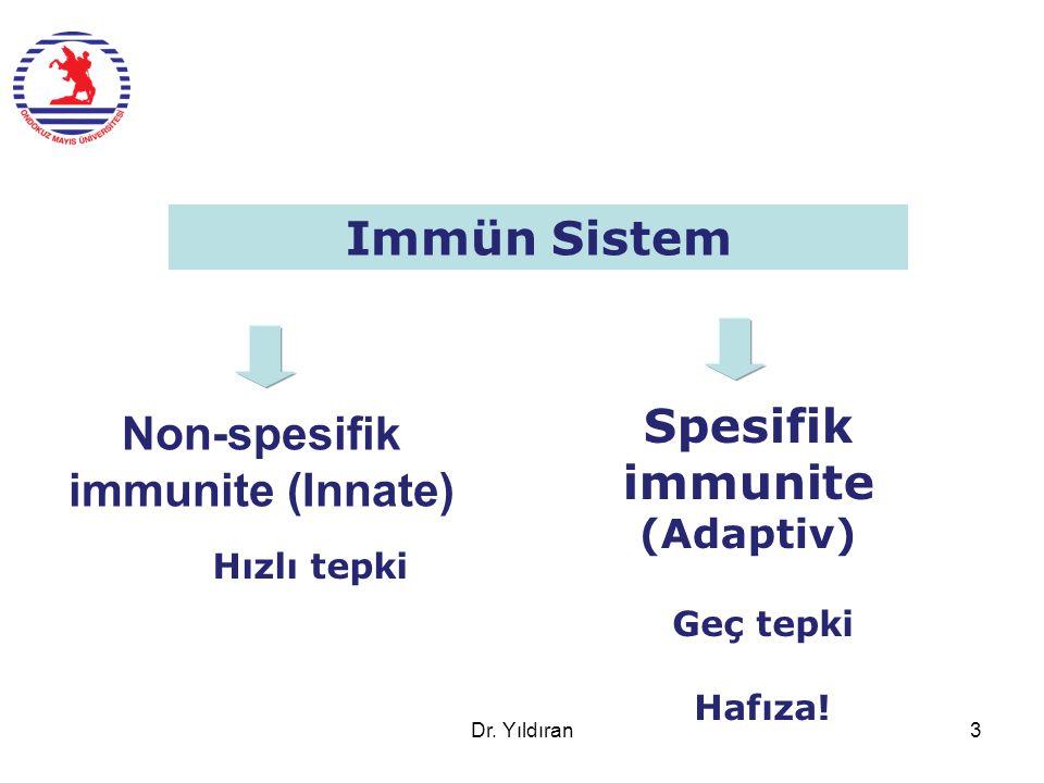 Non-spesifik immunite (Innate) Spesifik immunite (Adaptiv) Immün Sistem Geç tepki Hafıza! Hızlı tepki Dr. Yıldıran3