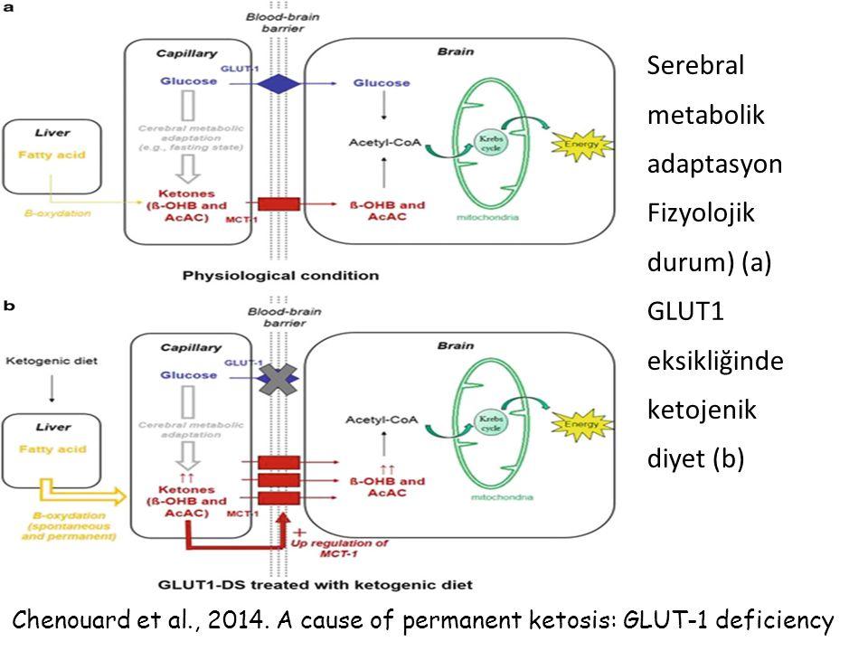 Serebral metabolik adaptasyon Fizyolojik durum) (a) GLUT1 eksikliğinde ketojenik diyet (b) Chenouard et al., 2014. A cause of permanent ketosis: GLUT-
