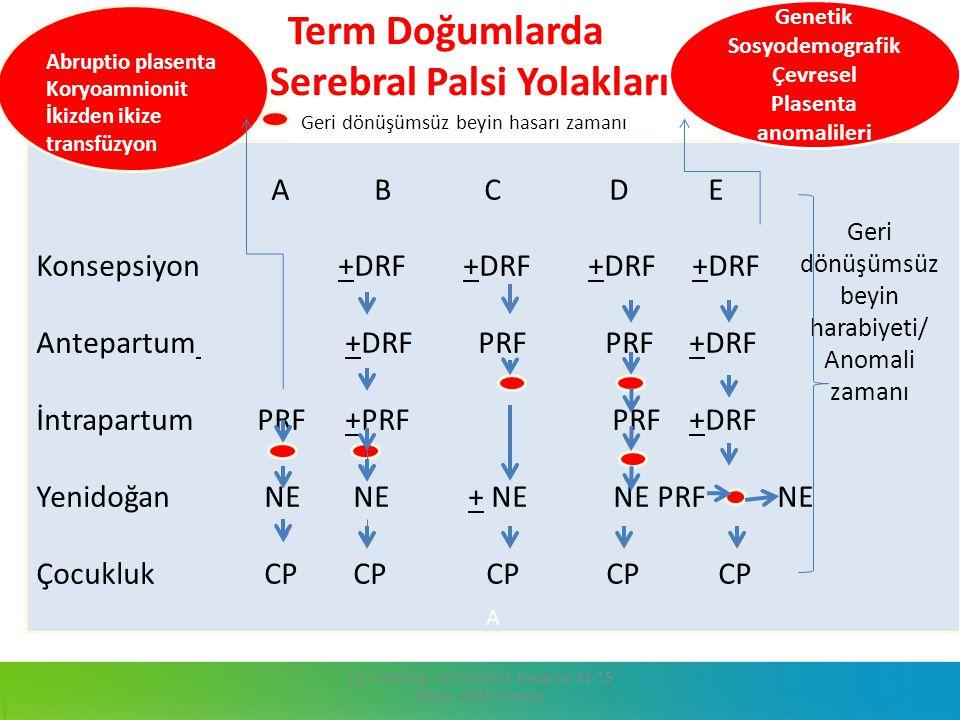 Term Doğumlarda Serebral Palsi Yolakları 13. Jinekoloji ve Obstetrik Kongresi 11-15 Mayıs 2015 Antalya A B C D E Konsepsiyon +DRF +DRF +DRF +DRF Antep