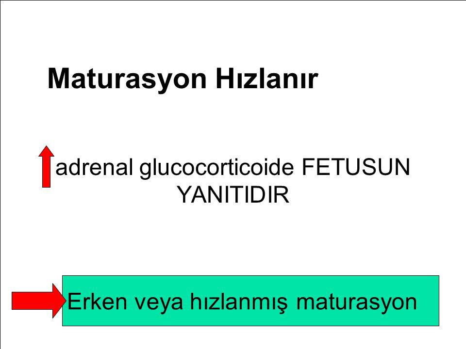 Maturasyon Hızlanır adrenal glucocorticoide FETUSUN YANITIDIR Erken veya hızlanmış maturasyon