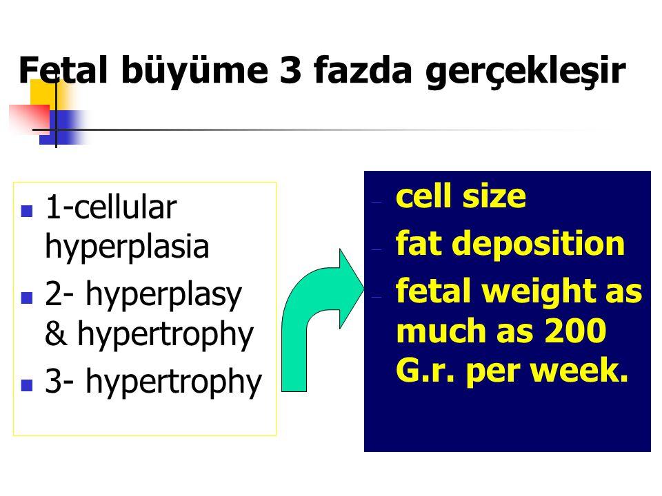 Fetal büyüme 3 fazda gerçekleşir 1-cellular hyperplasia 2- hyperplasy & hypertrophy 3- hypertrophy  cell size  fat deposition  fetal weight as much as 200 G.r.