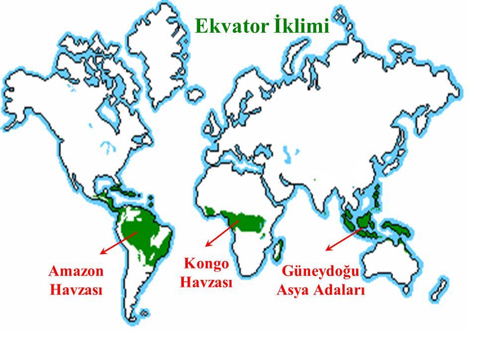 Ekvator İklimi Amazon Havzası Kongo Havzası Güneydoğu Asya Adaları