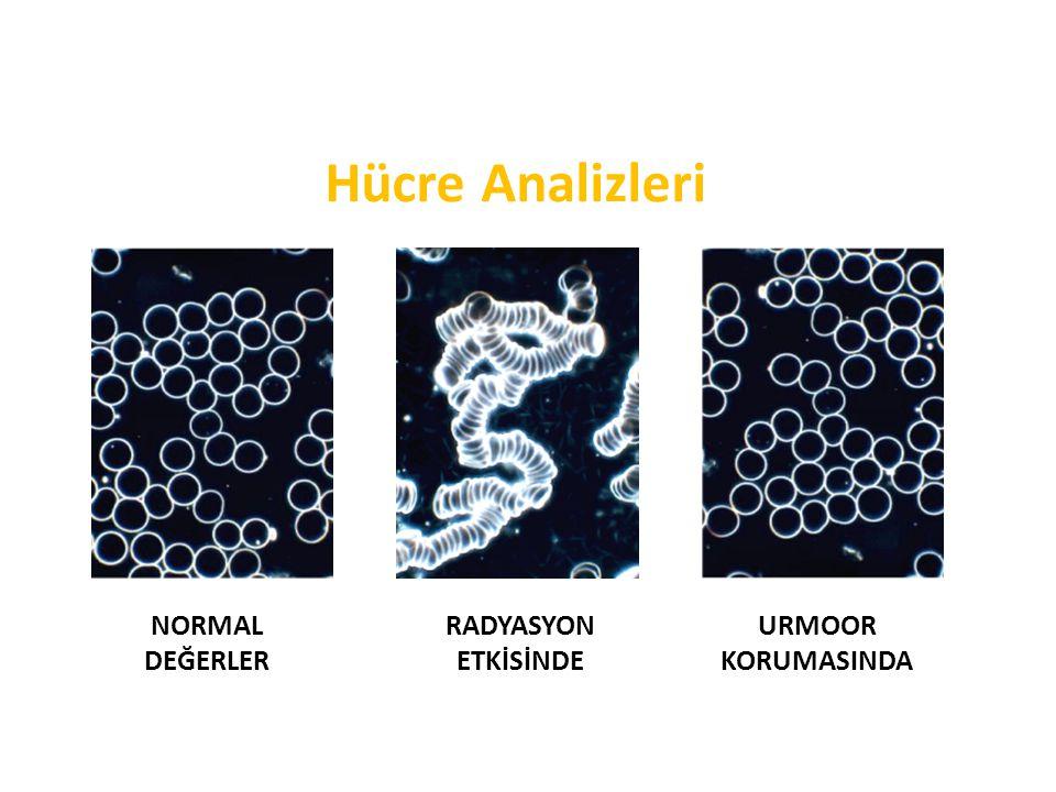 Hücre Analizleri NORMAL DEĞERLER RADYASYON ETKİSİNDE URMOOR KORUMASINDA