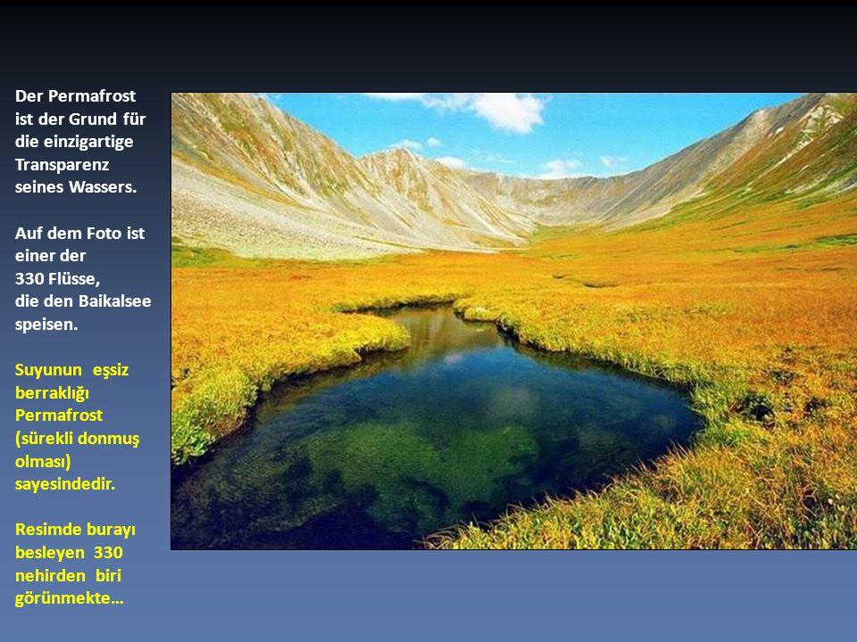 Er enthält 20 Prozent des weltweiten Süßwassers. Dünya tatlı suyunun % 20'si buradadır.