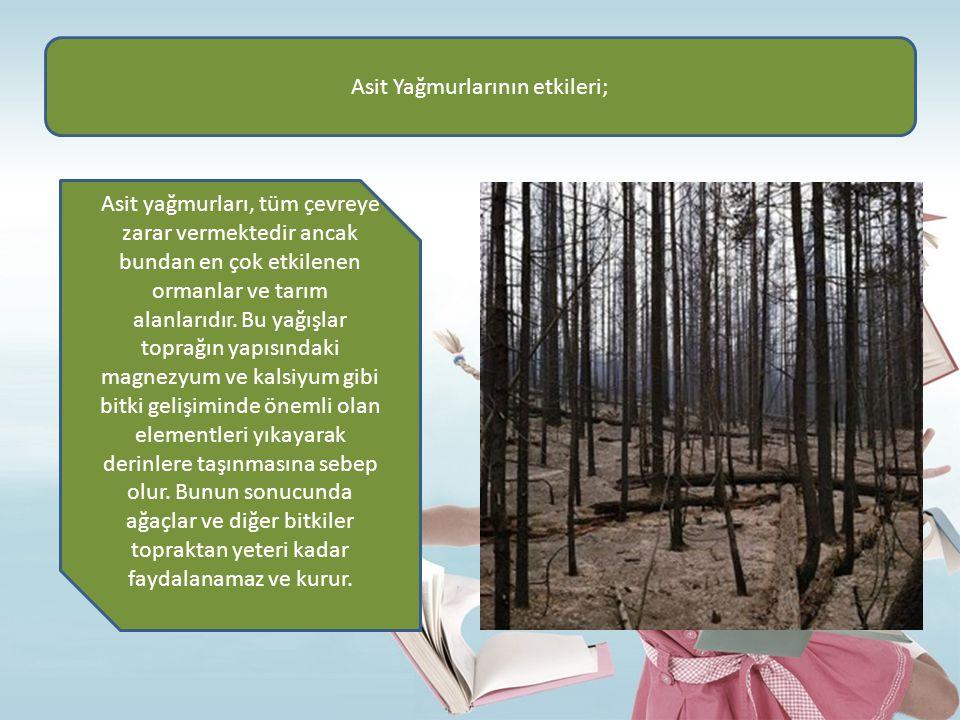 Asit Yağmurlarının etkileri; Asit yağmurları, tüm çevreye zarar vermektedir ancak bundan en çok etkilenen ormanlar ve tarım alanlarıdır. Bu yağışlar t
