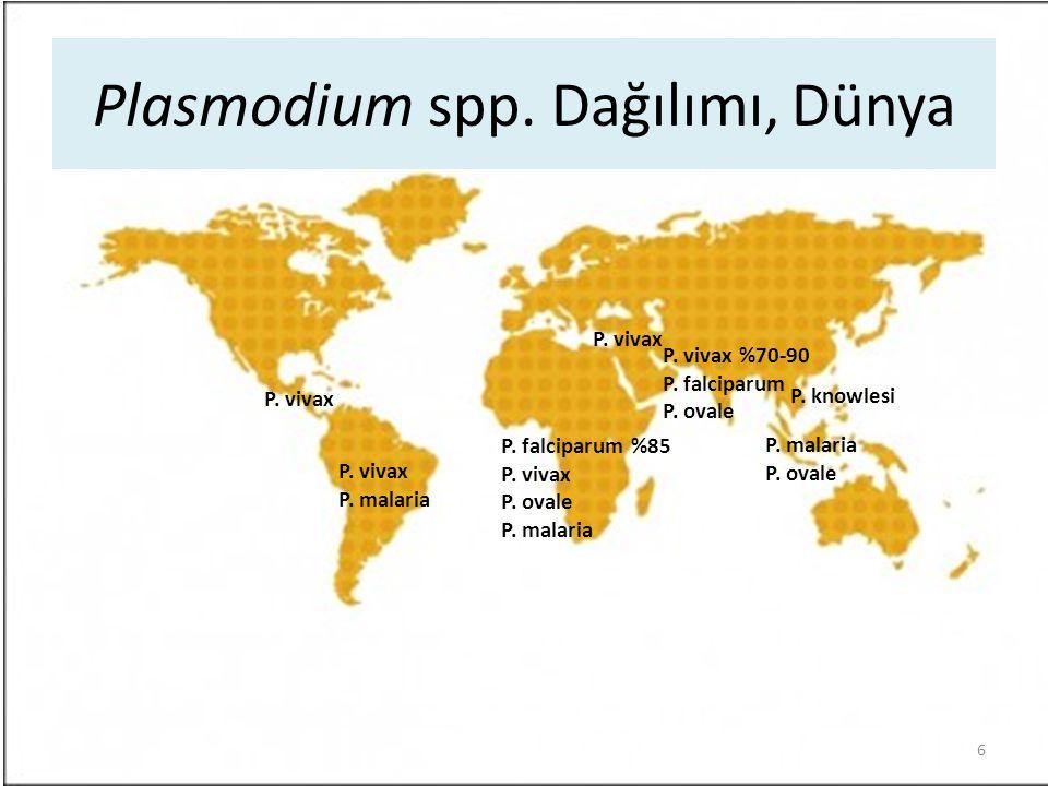 P. falciparum %85 P. vivax P. ovale P. malaria Plasmodium spp. Dağılımı, Dünya P. vivax %70-90 P. falciparum P. ovale P. vivax P. malaria P. vivax P.