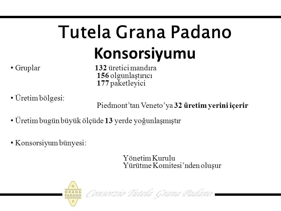 Tutela Grana Padano Konsorsiyumu Gruplar 132 üretici mandıra 156 olgunlaştırıcı 177 paketleyici Üretim bölgesi: Piedmont'tan Veneto'ya 32 üretim yerini içerir Üretim bugün büyük ölçüde 13 yerde yoğunlaşmıştır Konsorsiyum bünyesi: Yönetim Kurulu Yürütme Komitesi'nden oluşur