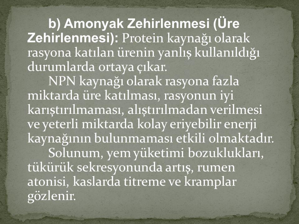 b) Amonyak Zehirlenmesi (Üre Zehirlenmesi): Protein kaynağı olarak rasyona katılan ürenin yanlış kullanıldığı durumlarda ortaya çıkar. NPN kaynağı ola