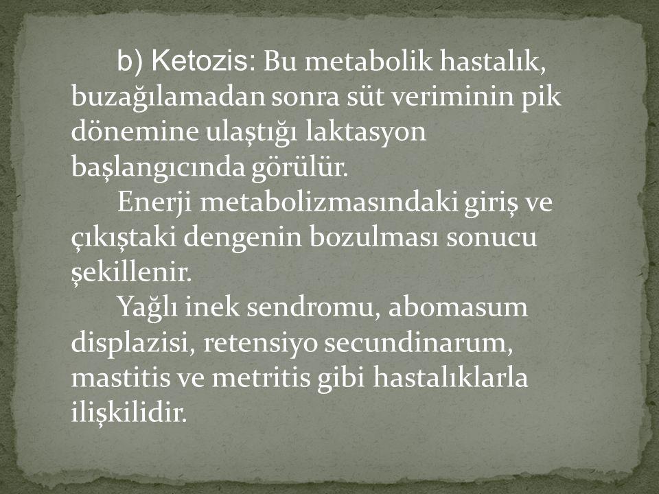 b) Ketozis: Bu metabolik hastalık, buzağılamadan sonra süt veriminin pik dönemine ulaştığı laktasyon başlangıcında görülür. Enerji metabolizmasındaki
