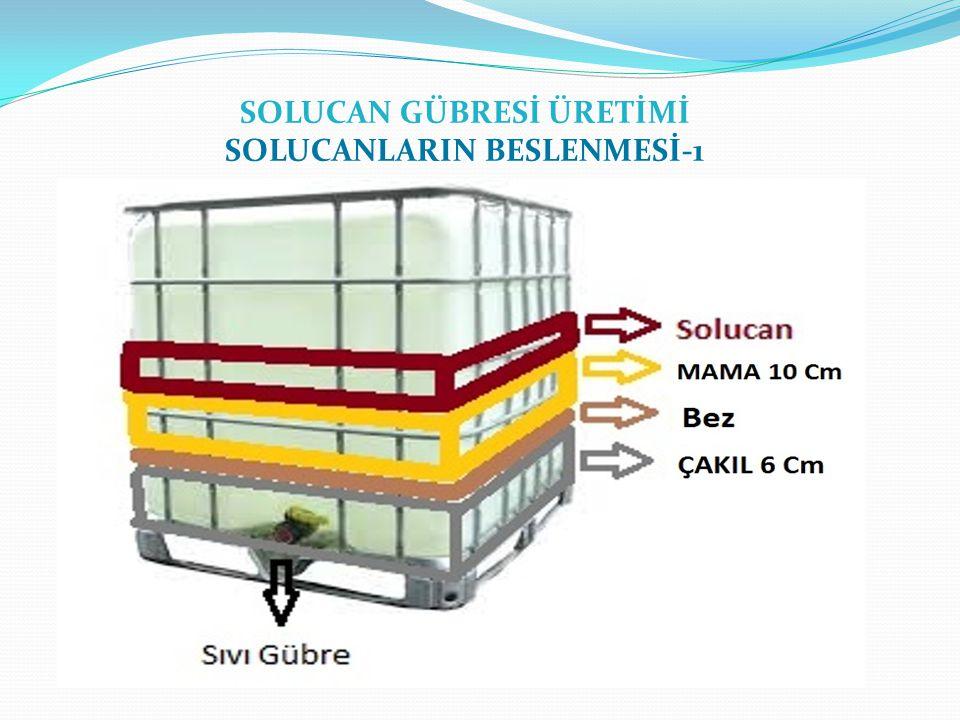 SOLUCAN GÜBRESİ ÜRETİMİ SOLUCANLARIN BESLENMESİ-1