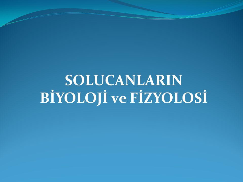 SOLUCANLARIN BİYOLOJİ ve FİZYOLOSİ