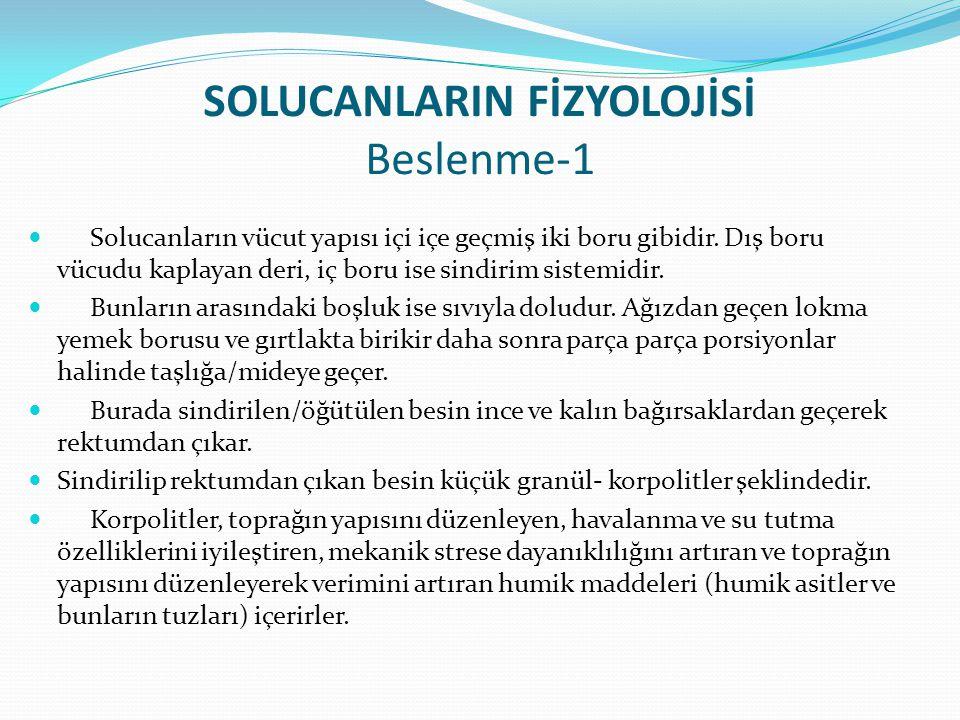 SOLUCANLARIN FİZYOLOJİSİ Beslenme-1 Solucanların vücut yapısı içi içe geçmiş iki boru gibidir.