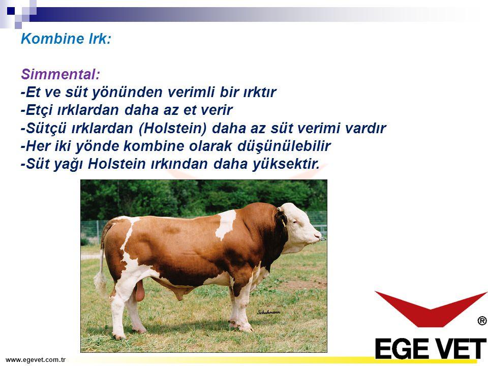 Kombine Irk: Simmental: -Et ve süt yönünden verimli bir ırktır -Etçi ırklardan daha az et verir -Sütçü ırklardan (Holstein) daha az süt verimi vardır