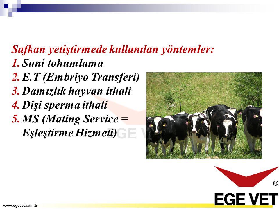 Safkan yetiştirmede kullanılan yöntemler: 1.Suni tohumlama 2.E.T (Embriyo Transferi) 3.Damızlık hayvan ithali 4.Dişi sperma ithali 5.MS (Mating Servic