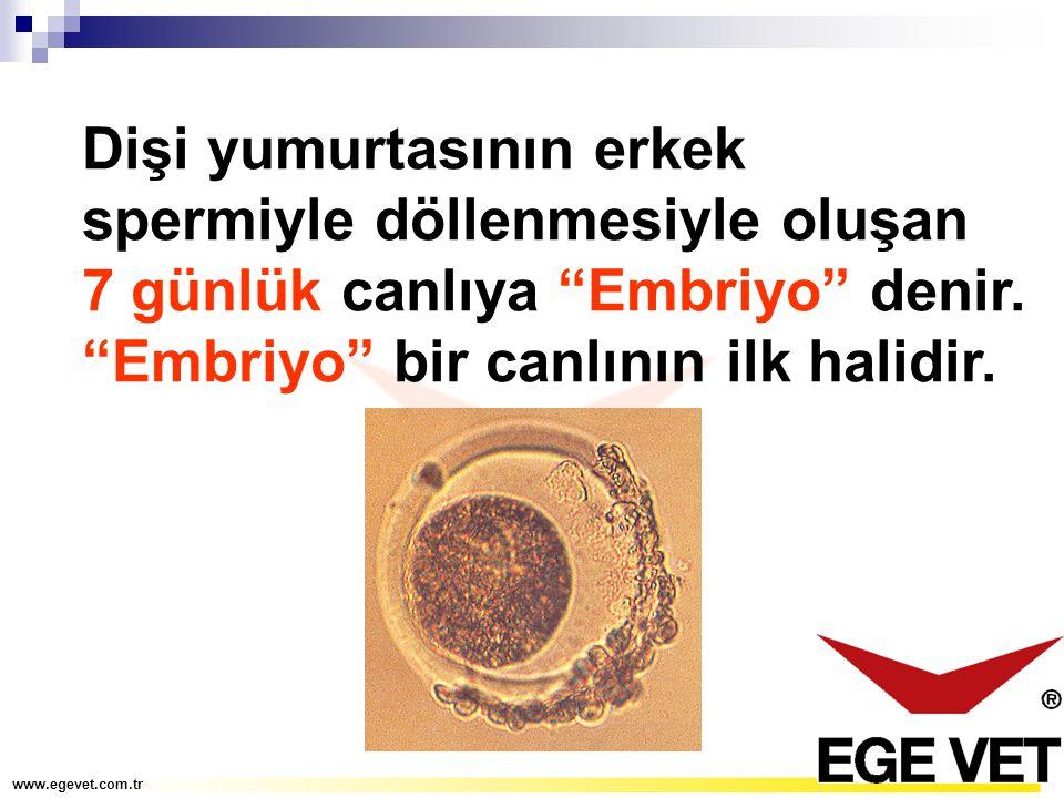 """Dişi yumurtasının erkek spermiyle döllenmesiyle oluşan 7 günlük canlıya """"Embriyo"""" denir. """"Embriyo"""" bir canlının ilk halidir."""