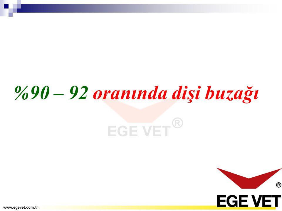 %90 – 92 oranında dişi buzağı www.egevet.com.tr