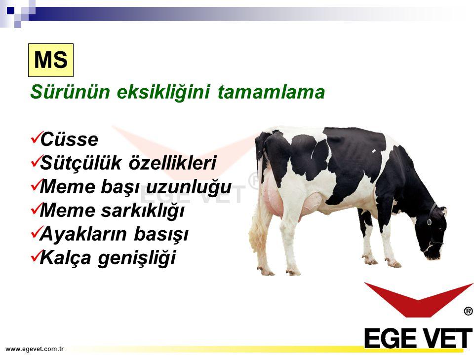 Sürünün eksikliğini tamamlama Cüsse Sütçülük özellikleri Meme başı uzunluğu Meme sarkıklığı Ayakların basışı Kalça genişliği MS www.egevet.com.tr