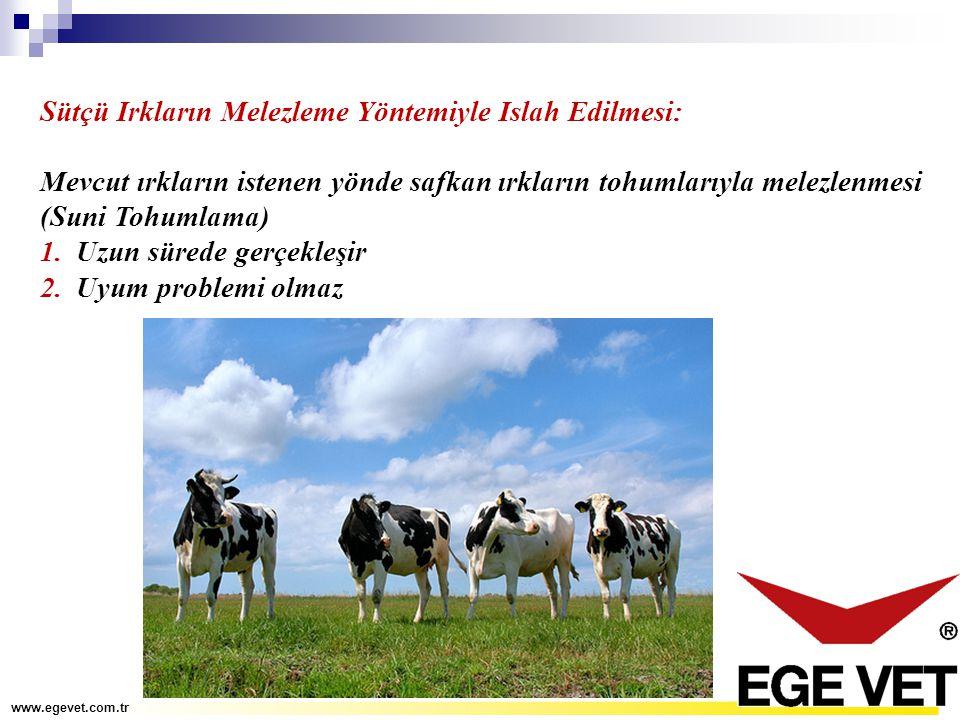 Sütçü Irkların Melezleme Yöntemiyle Islah Edilmesi: Mevcut ırkların istenen yönde safkan ırkların tohumlarıyla melezlenmesi (Suni Tohumlama) 1.Uzun sü