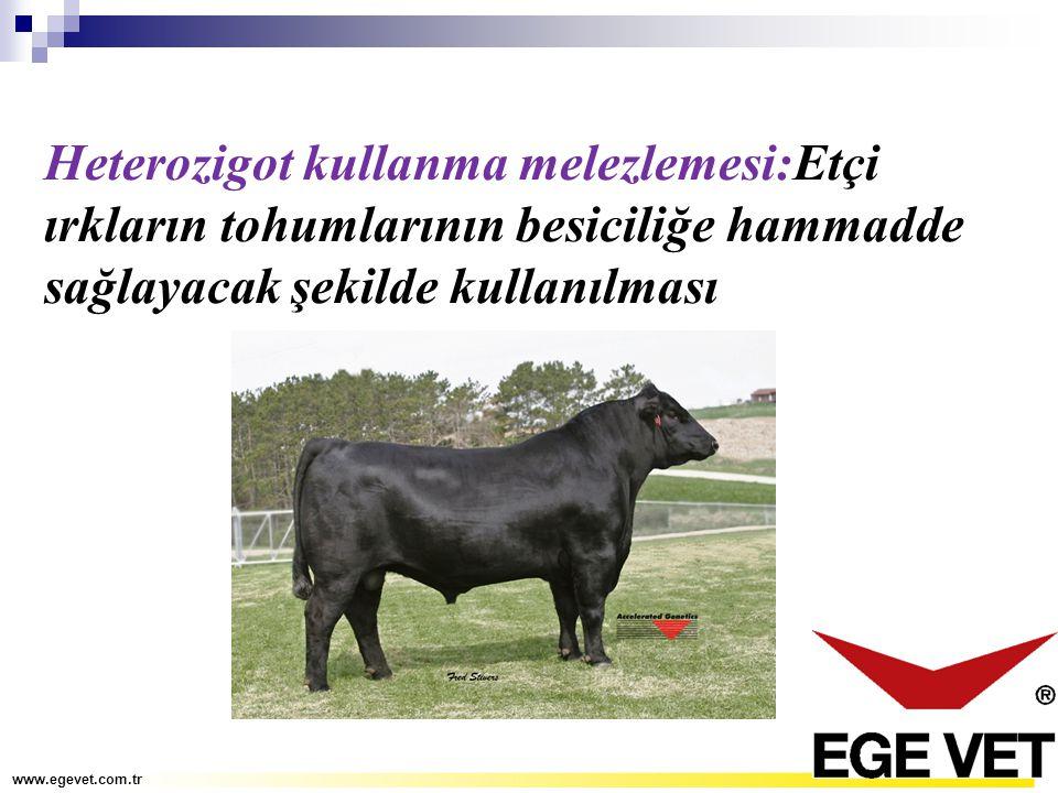Heterozigot kullanma melezlemesi:Etçi ırkların tohumlarının besiciliğe hammadde sağlayacak şekilde kullanılması www.egevet.com.tr