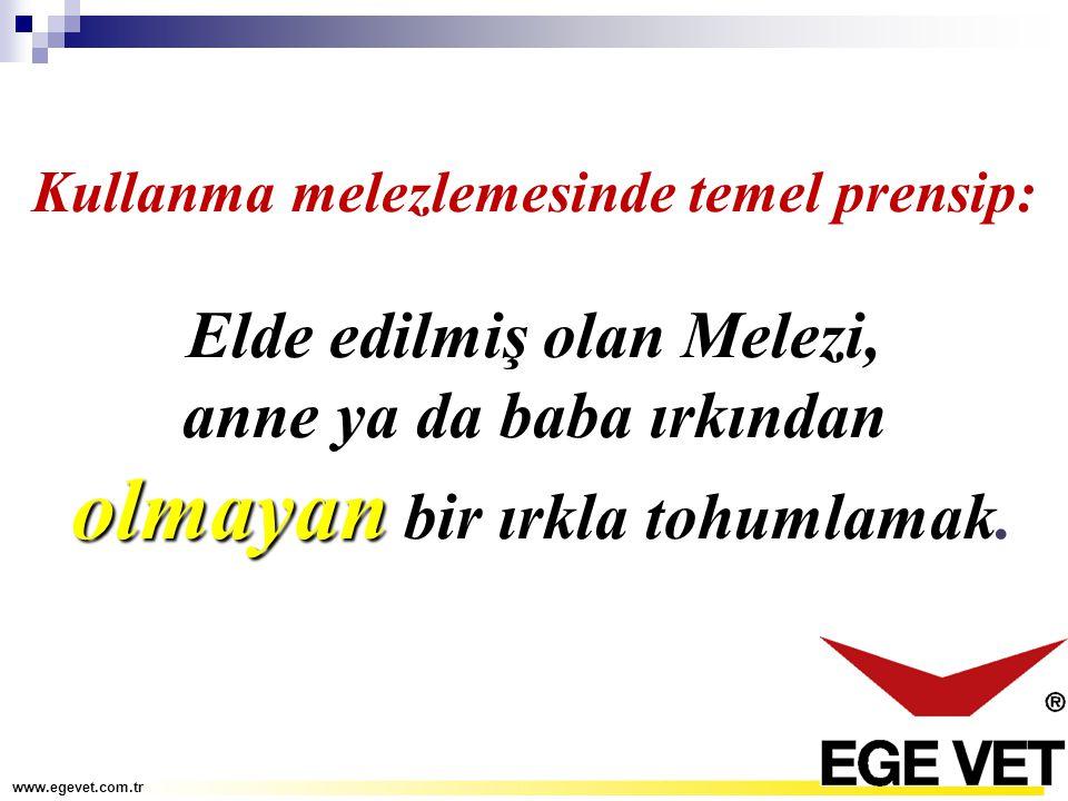 Kullanma melezlemesinde temel prensip: Elde edilmiş olan Melezi, anne ya da baba ırkından olmayan olmayan bir ırkla tohumlamak. www.egevet.com.tr