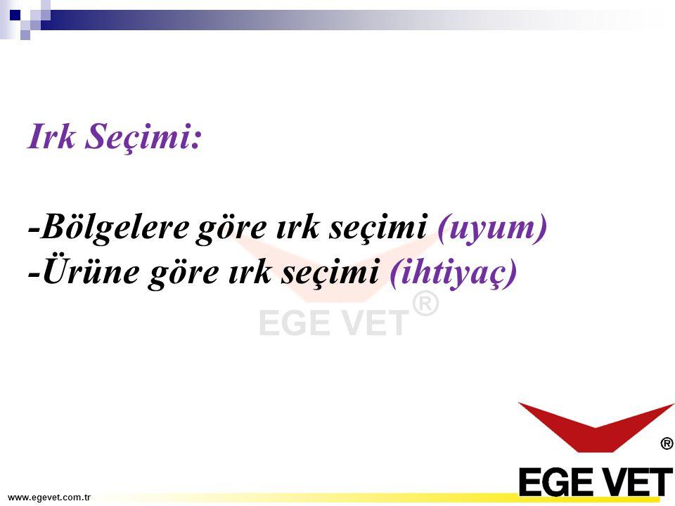 Irk Seçimi: -Bölgelere göre ırk seçimi (uyum) -Ürüne göre ırk seçimi (ihtiyaç) www.egevet.com.tr