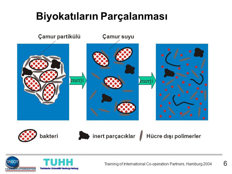 Biyokatıların Parçalanması bakteri inert parçacıklarHücre dışı polimerler Çamur partikülü Çamur suyu enerji 6 Training of International Co-operation P