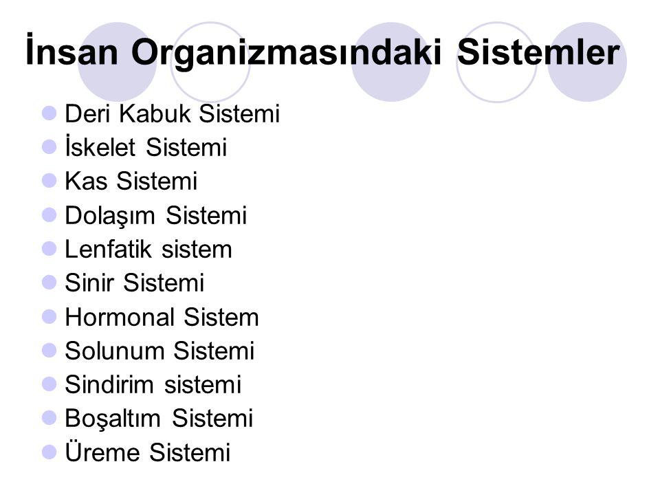 İnsan Organizmasındaki Sistemler Deri Kabuk Sistemi İskelet Sistemi Kas Sistemi Dolaşım Sistemi Lenfatik sistem Sinir Sistemi Hormonal Sistem Solunum